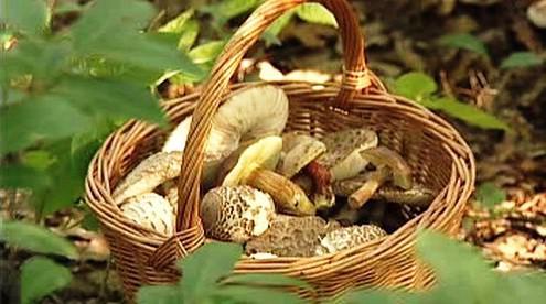 Košík hub