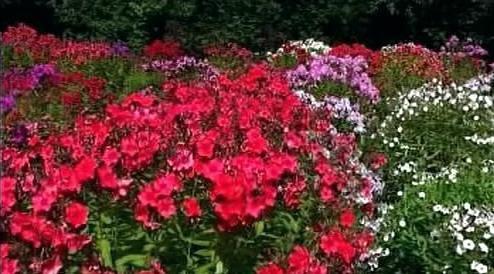 Květiny v Pavlovské experimentální stanici
