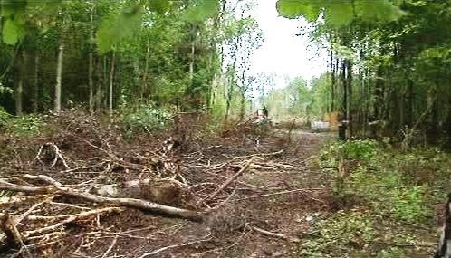 Vykácený les v Chimkách