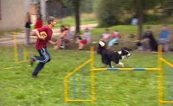 Tábor po děti a psy