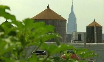 Střechy velkoměsta se zelenají
