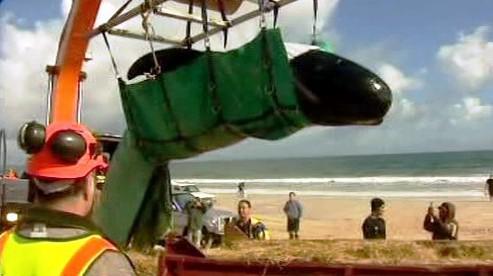 Záchrana velryb
