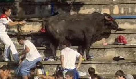 Splašený býk zranil v hledišti na třicet lidí