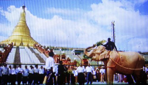 Bílá slonice