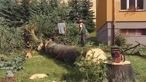 Poražený strom v Habartově na Sokolovsku