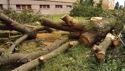 Poražený strom