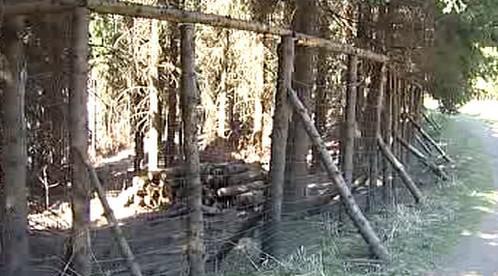 Oplocení nového pralesa