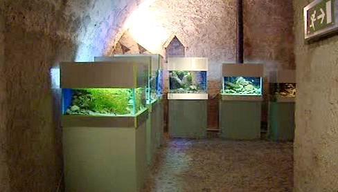 Výstava Pod hladinou Vltavy
