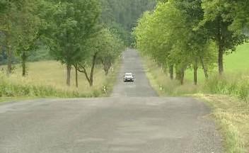Stromy podél cest