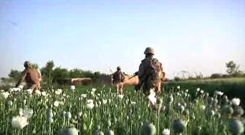 Vojáci v makových polích v Afghánistánu