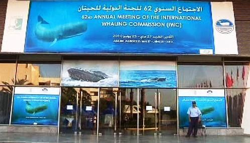Jednání Mezinárodní velrybářské komise (IWC)