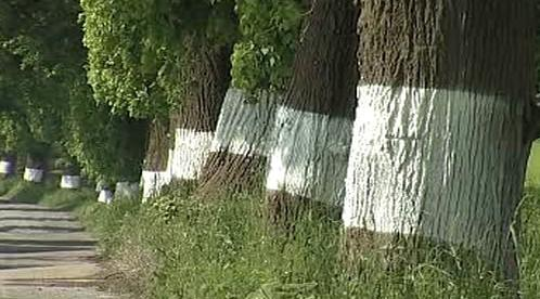 Natřené kmeny stromů