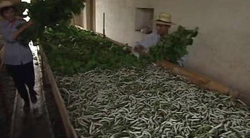 Výroba hedvábí v Číně