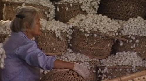 Tradiční výroba hedvábí
