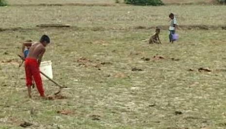 Práce na kambodžských polích