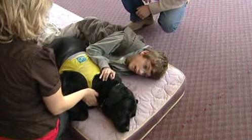 Asistenční pes pomáhá handicapovanému