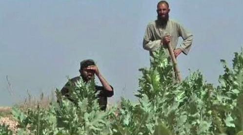 Afghánští pěstitelé máku