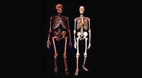 Porovnání kostry neandertálce a moderního člověka