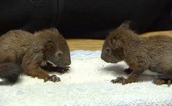 Zachráněné veverky