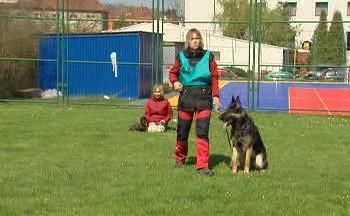 Mezinárodní mistrovství služebních psů