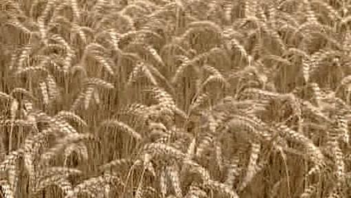 České zemědělství