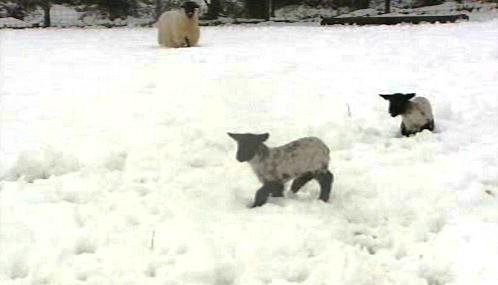 Sněhová kalamita v Británii ztrpčuje život i zvířatům