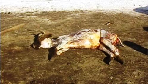 Uhynulé zvíře