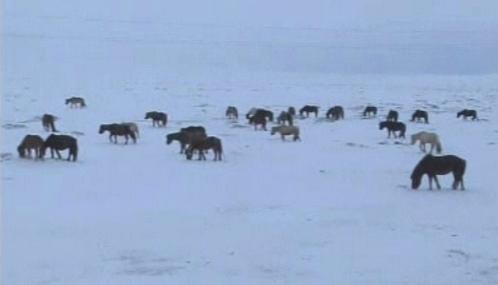 Mrazy ohrožují mongolská stáda