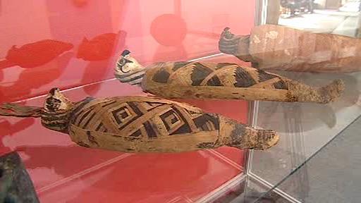 Mumie sokolů