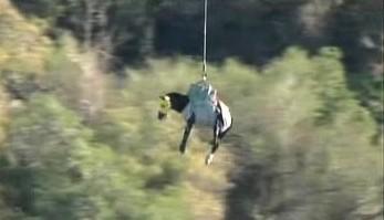 Létající kůň