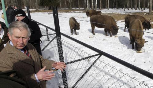 Princ Charles v polském Bělověžském národním parku