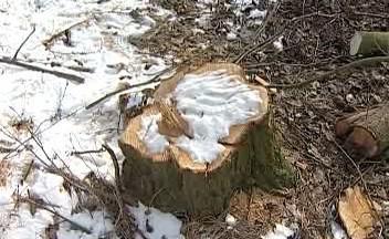 Pokácený strom
