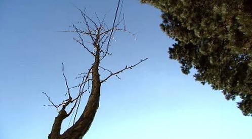 Vysazený strom
