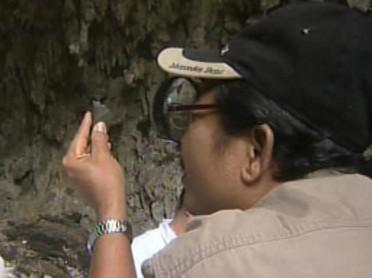 Nález vědců na ostrově Flores