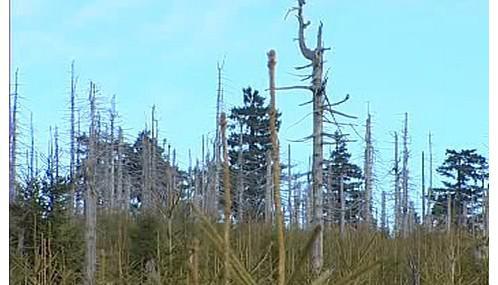 Zničený les v Jizerských horách