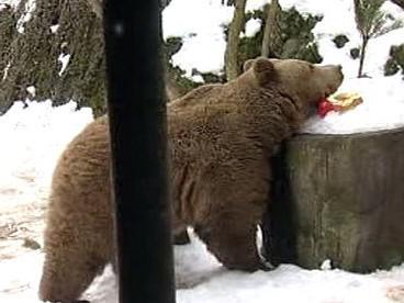 Medvědi se pomalu probouzejí