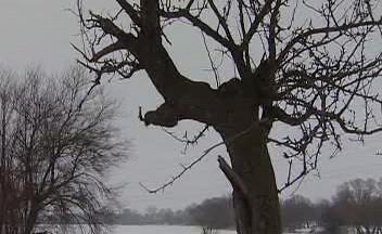 Ořezaný strom
