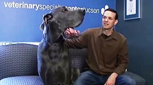 George - nejvyšší pes světa