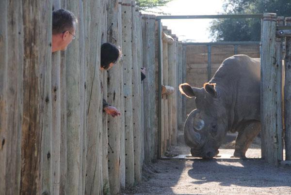 Čeští nosorožci v Keni - tak chutná Afrika