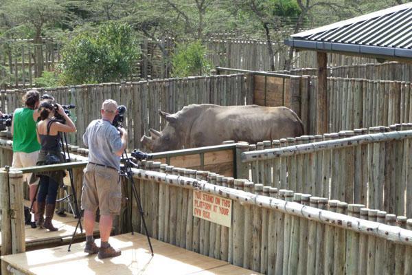 Čeští nosorožci přijeli do Keni