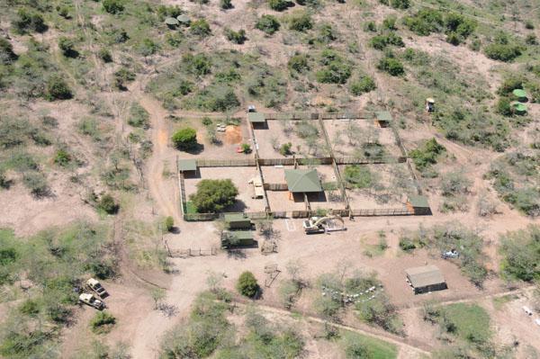 Čeští nosorožci v Keni - jejich nový domov