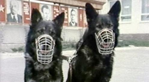 Pohraniční psi