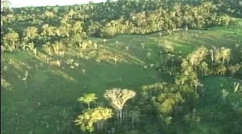 Kácení pralesů