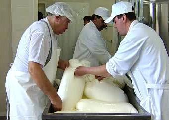 Výroba sýra na kozí farmě