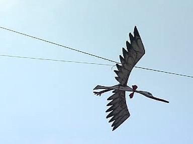 Čáp - symbol AniFestu