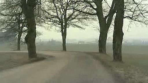 Stromy podél silnice