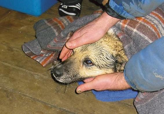 Polský voříšek přežil tři dny v mrazu na ledové kře