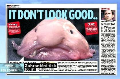Daily Mirror o blobfish