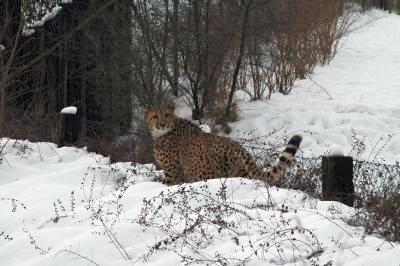 Gepardice na útěku