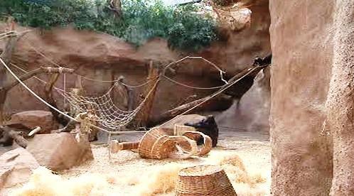 Výběh goril v pražské zoo